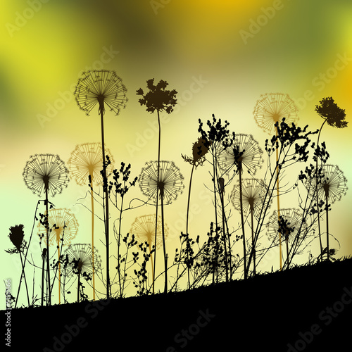 Floral background with dandelion