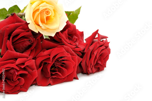 canvas print motiv - Serghei Velusceac : collection rose isolated on white background