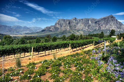 Deurstickers Zuid Afrika Vineyard in stellenbosch, South Africa