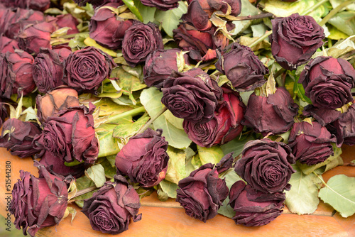 Valokuva  Alte Rosen