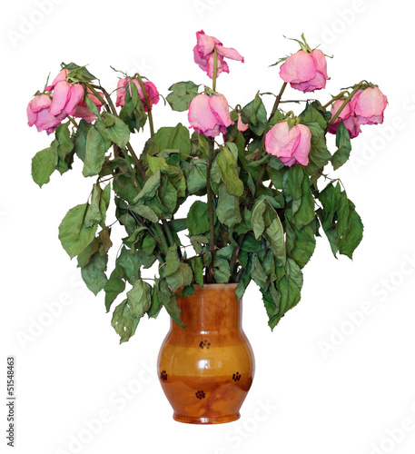 Valokuva  Dried flowers