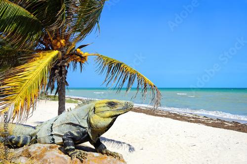 plage exotique - 51561626
