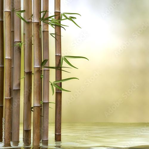 bambus-w-wodzie