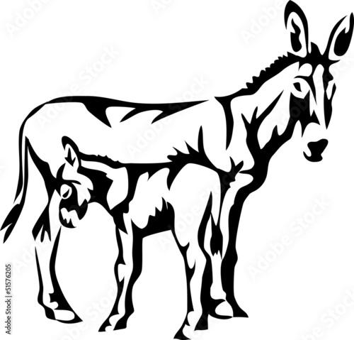 Valokuvatapetti donkey with young