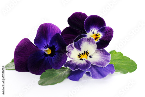 Spoed Foto op Canvas Pansies pansies close up