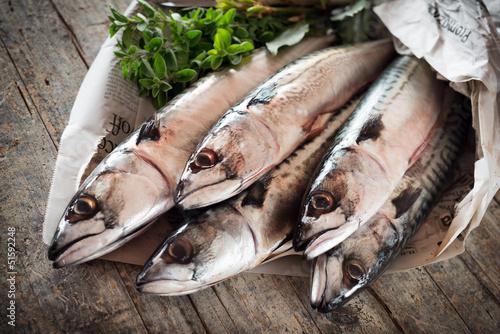 mackerel - sgombri Tapéta, Fotótapéta