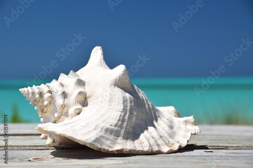 Conch against ocean. Exuma, Bahamas Fototapete