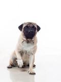 injured dog 1