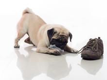 Dog Chew Socks