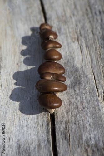 Photo  setas en tronco seco