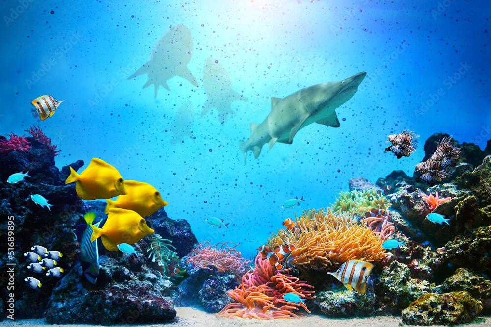 Fototapety, obrazy: Podwodna scena. Rafa koralowa, grupy ryb, rekiny