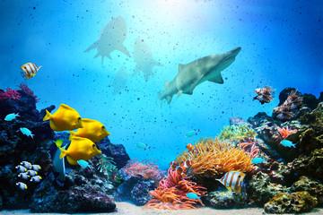 Underwater scene. Coral reef, fish groups, sharks
