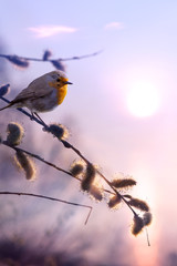 Fototapeta Minimalistyczny art beautiful spring morning nature background