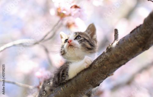 Keuken foto achterwand Kat 子猫の花見