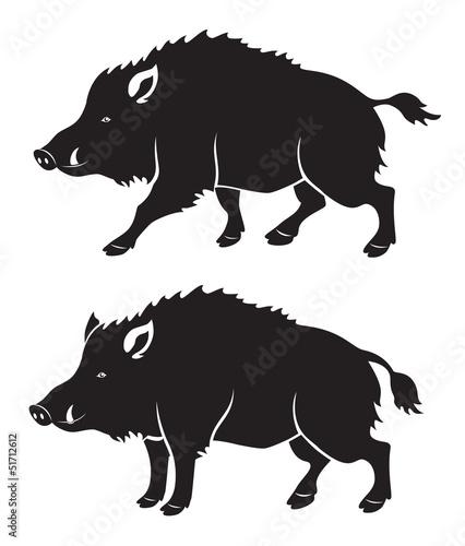 Fényképezés wild boar