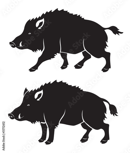Canvas wild boar