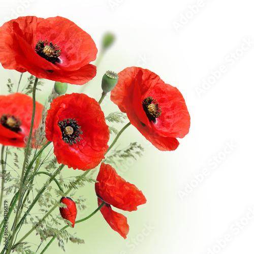 kwiaty-maku