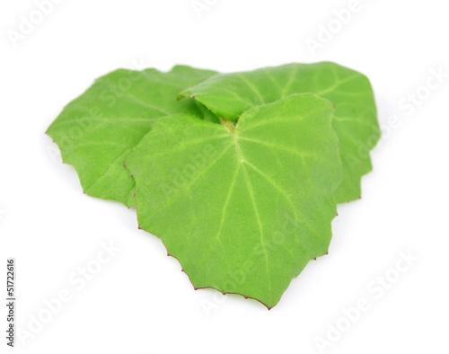 Tablou Canvas Coltsfoot leaf