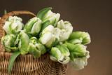Fototapeta Kwiaty - Bukiet tulipanów