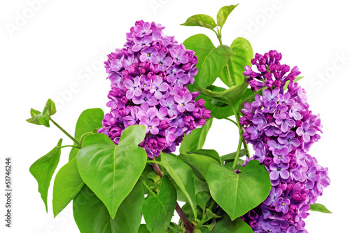 Tuinposter Lilac Beautiful Bunch of Lilac in the Vase.