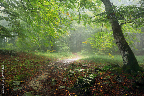 Tuinposter Bos in mist path in forest with rain and fog