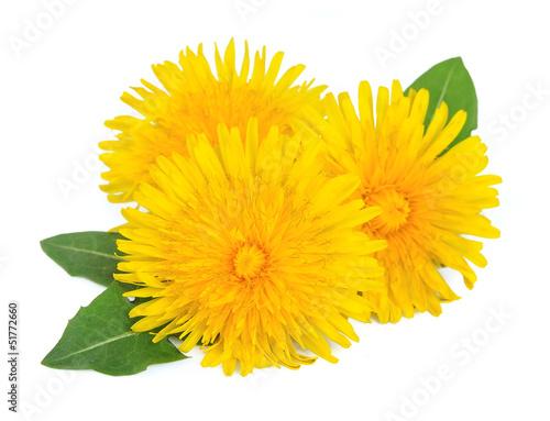 Papiers peints Pissenlit Dandelion flowers