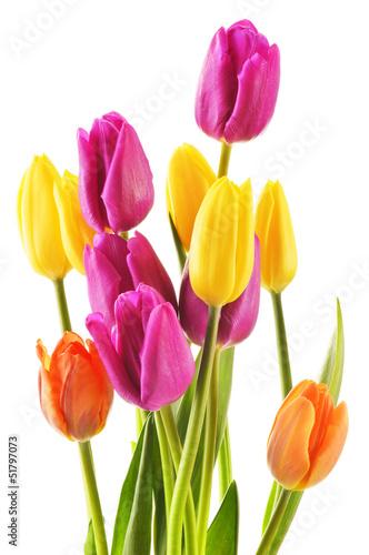 Poster Fleuriste Bouquet of tulips on white background. Tulipa