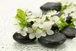 Kwiaty dzikiej śliwy z kamieniami do spa