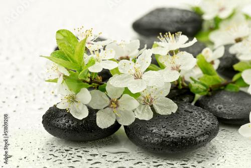 Fototapeta Kwiaty dzikiej śliwy z kamieniami do spa obraz