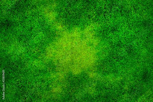 Zielona trawa - fototapety na wymiar