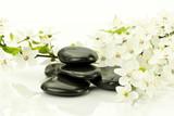 Fototapeta Kwiaty - Kwiaty dzikiej śliwy z kamieniami do spa