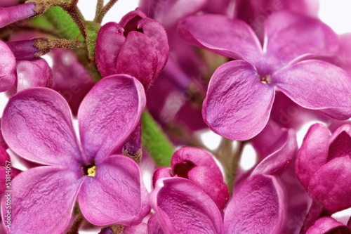 Spoed Fotobehang Macro Beautiful Bunch of Lilac close-up