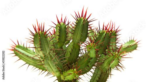 Poster Cactus cactus
