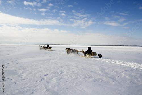 Fotografie, Obraz  reindeer sledge in arctic