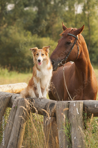 Staande foto Paardrijden Red border collie dog and horse