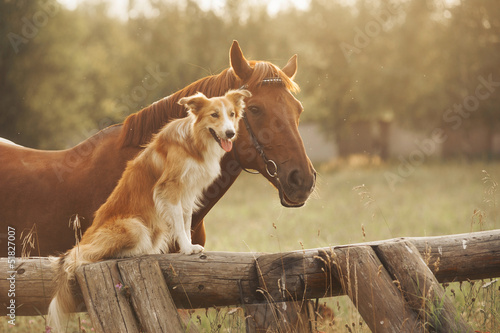 Staande foto Paarden Red border collie dog and horse