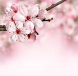 Frühlingblumen in Rosatönen