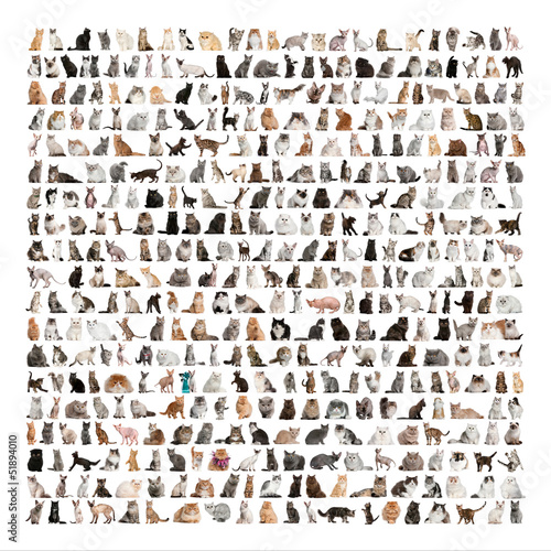 Photo  Large group of 471 cats breeds in front of a white background