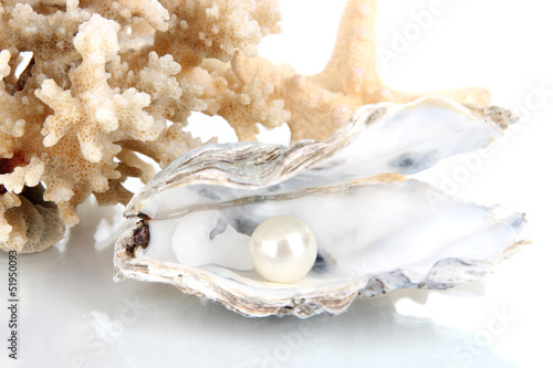 Carta da parati Open oyster with pearl isolated on white