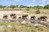 Fototapeta Sawanna - Family of elefants
