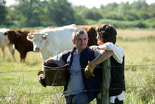 Farmer Couple Tending To Cows