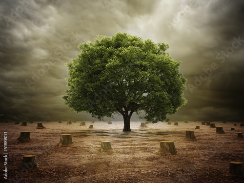 Fototapety, obrazy: Lonely tree in a deforested landscape