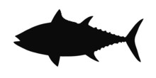 HQ Vector Silhouette Of Tuna Isolated On White.