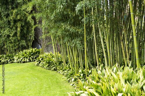 Montage in der Fensternische Bambus Bamboo