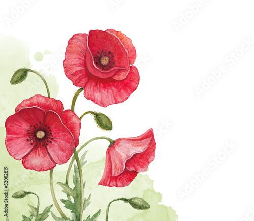 tle-akwarela-z-kwiatami-maku
