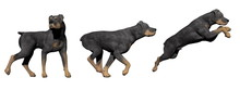 Rottweiler Dog - 3D Render