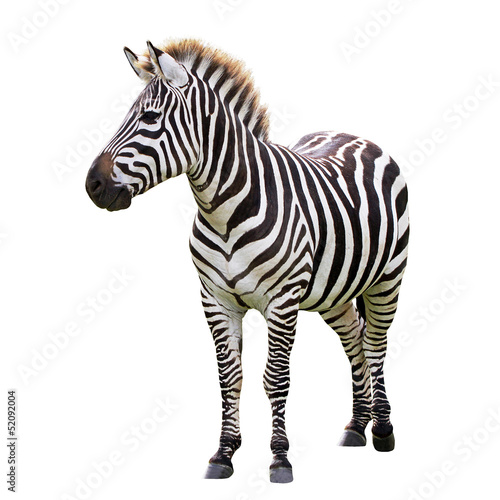 Spoed Foto op Canvas Zebra Zebra isolated on white