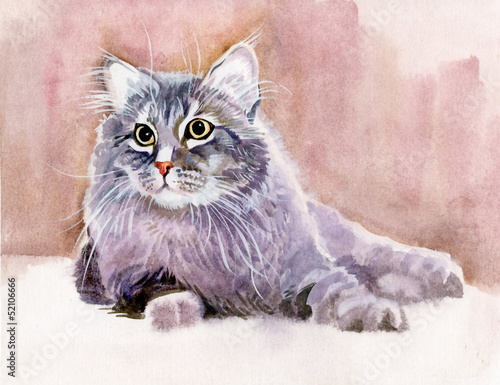 kolekcja-zwierzat-cat