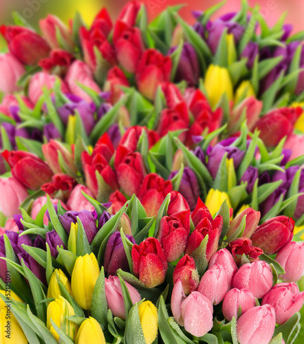 Poster Tulp fresh spring tulip flowers with water drops