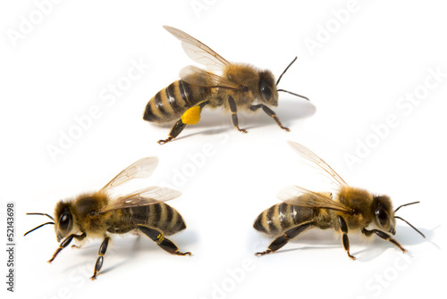 Papiers peints Bee Three bees in front of white background